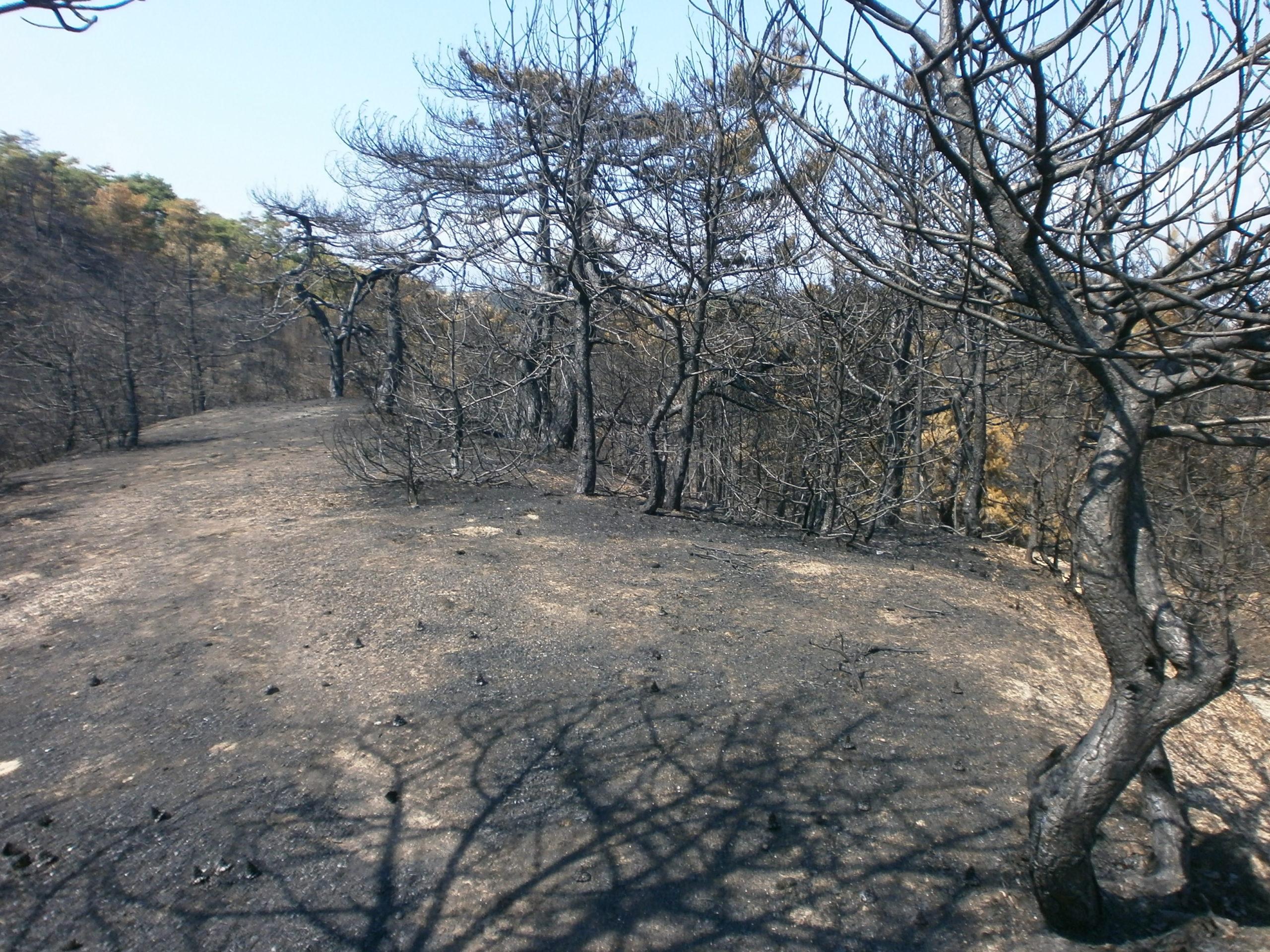 جزء من جبل إلينيكا في مقدونيا الشمالية خلال حرائق الغابات عام 2012.